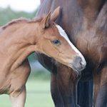 home-paard-pony-veulen-flexinebkopie
